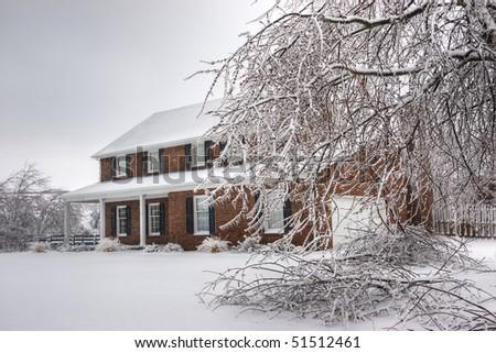 Tree Damage - stock photo