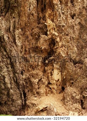 Tree damaged by termites - stock photo