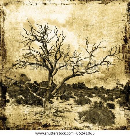 Tree-Desert - stock photo