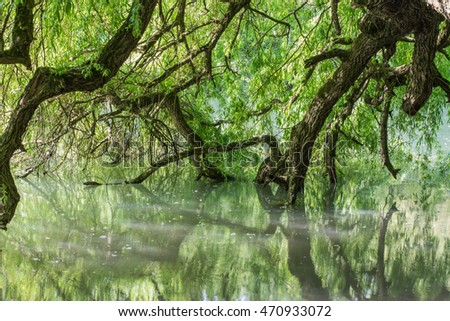 Tree diving in a river