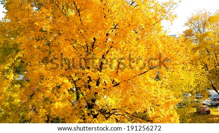 Tree during autumn in Warsaw housing - stock photo