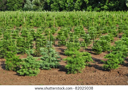 Tree farm nursery plantation,young forest grow - stock photo