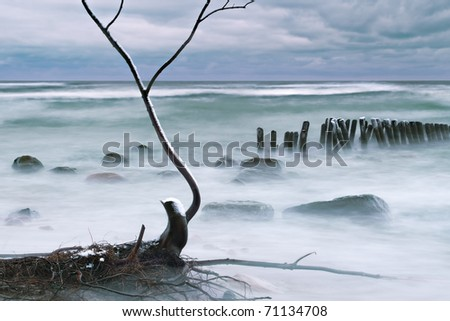tree fell to the water with a high bank of the Semba peninsula, destroyed by the winter Strohm shot at long exposures - stock photo