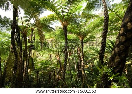 Tree fern jungle, Okinawa, Japan - stock photo