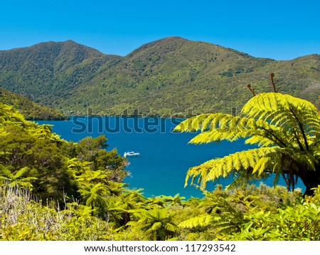 Tree ferns and blue water in the Marlborough sounds, New Zealand - stock photo