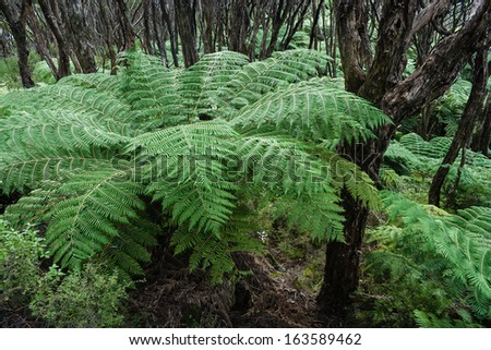 tree ferns in rain forest - stock photo