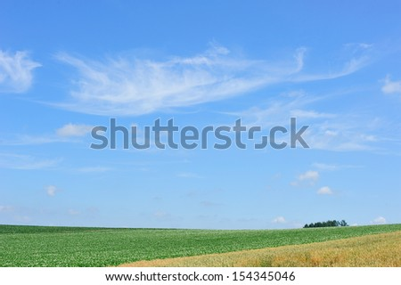 Tree, filed, and sky, north of Japan - stock photo