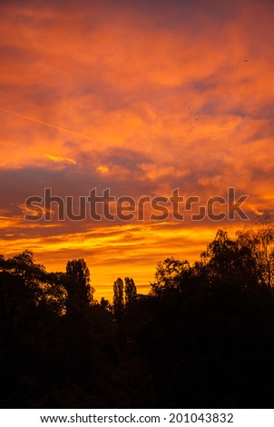 Tree forest in silhouette at colorful sunset. - stock photo