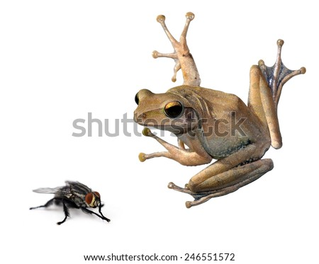 tree Frog and fly on a white - stock photo