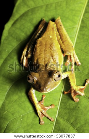 tree frog in tropical rain forest looking up - stock photo