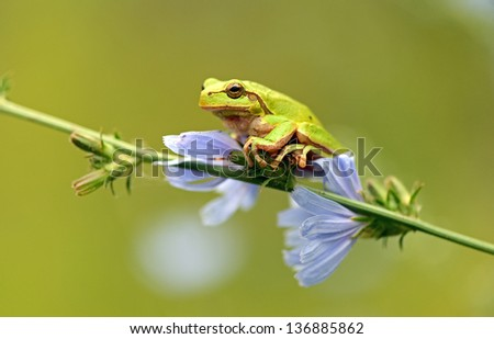 Tree frog on a branch in the spring - stock photo