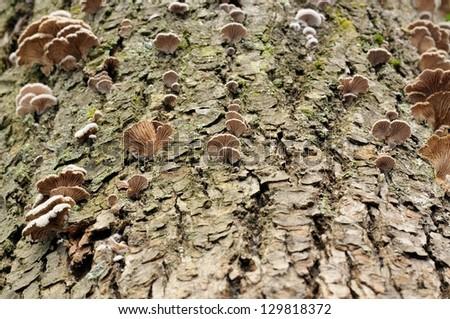 Tree Fungi - stock photo