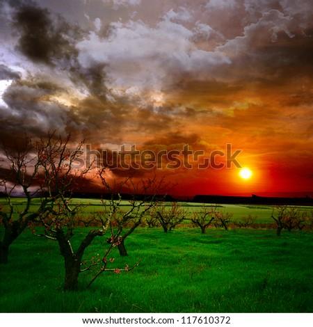 tree garden at the sunset - stock photo