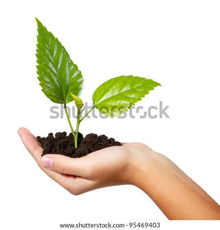 tree green fresh in female hand isolated on white background - stock photo