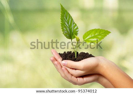 tree green fresh in female hand over summer background - stock photo