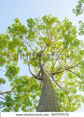 Tree green leaves - stock photo