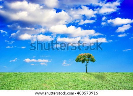 tree grow alone on the grassland  - stock photo