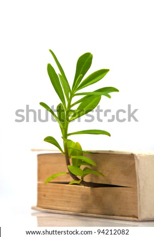tree grow from book - stock photo