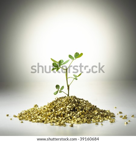 Tree grow on gold. Concept of development, growth, fortune, accumulation - stock photo