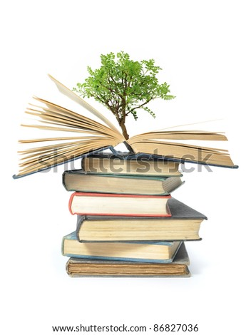 Tree growing from a stack of books - stock photo