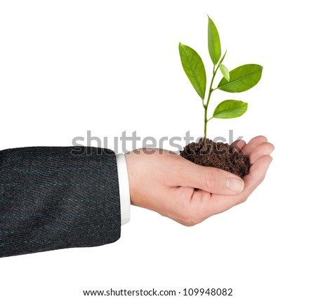 Tree growing from hand - stock photo