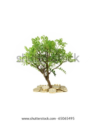 Tree growing from money - stock photo