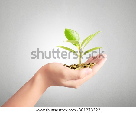 Tree growing from pile of coins, investment concept