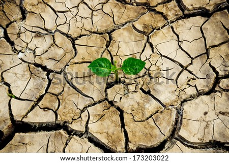 tree growing on cracked earth / growing tree / save the world / environmental problems / cut tree