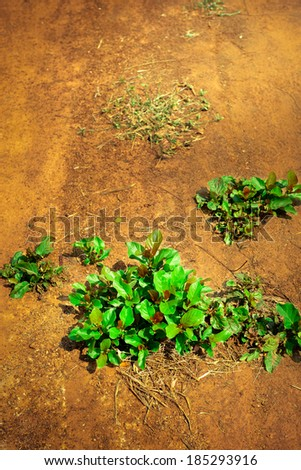Tree growing on dry land - save the world - environmental problems - stock photo