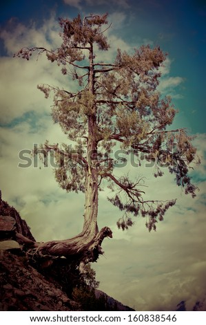 Tree growing on on the cliff rock over cloudy sky. Image in vintage style. India