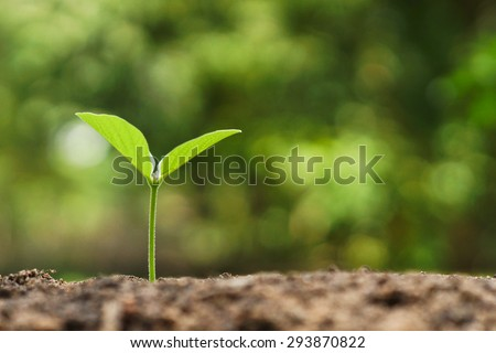 tree growing on soil with green background / baby plant begins new life - stock photo