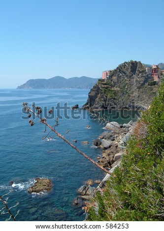 Tree growing out of a cliff at a 45-degree angle along a beautiful coastline - stock photo