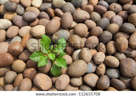 Tree growth from pebbles background