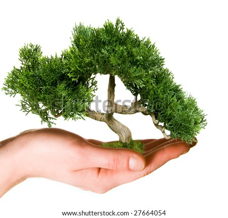 Tree held in hand - stock photo