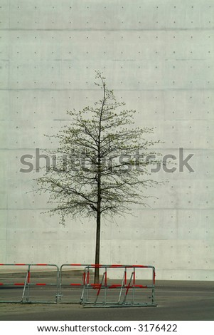 tree in a concrete environment