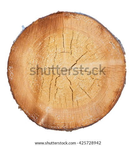 tree in a cut on a white background