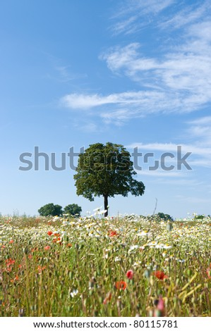 Tree in a field against a blue sky.