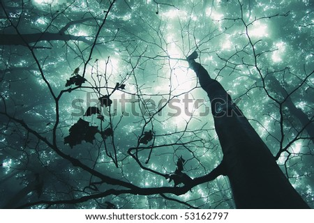 tree in a magical forest - stock photo