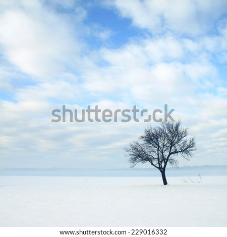 Tree in a snow covered field - stock photo