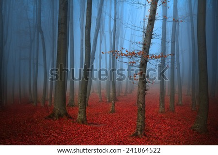 Tree in blue fog into the woods - stock photo
