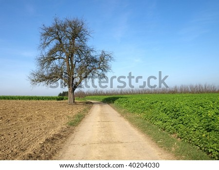 Tree in country lane - stock photo