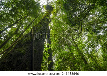 tree in deep tropical forest, Khao Yai National Park - stock photo