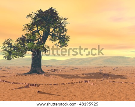 tree in desert in hot day