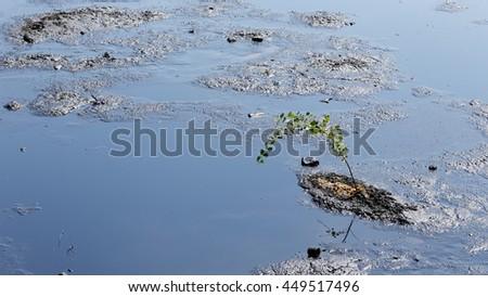 Tree in destruction, environmental liquid oil pollution, disaster dirty, contamination of the environment, oil lagoon, toxic soil, waste, Czech Republic, Europe, EU - stock photo