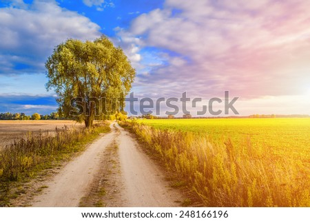 Tree in field at sunset in late summer. - stock photo