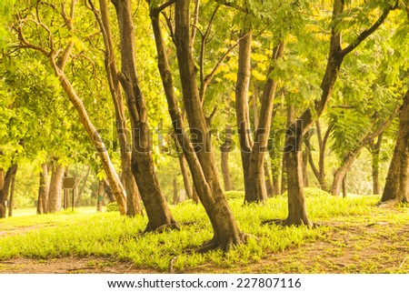 Tree in Forest at Sunset - stock photo