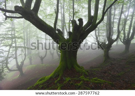 tree in forest with fog