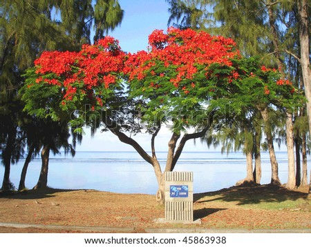 Tree in front of the reunion lagoon - stock photo