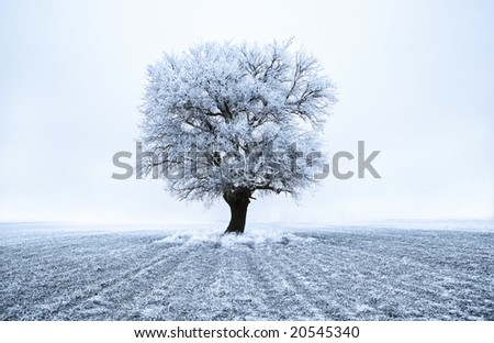 Tree in frost at frozen field. Blue tone. Winter scene.