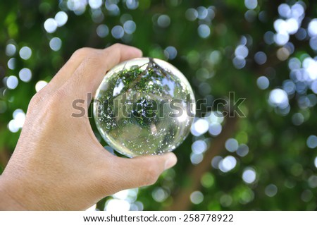 Tree in glass ball  and bokeh abstract background  - stock photo